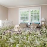 Третий лишний: Каким цветам не место в вашей спальне?